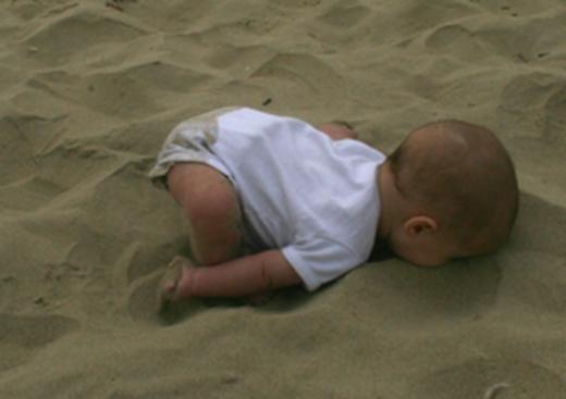 baby-ostrich