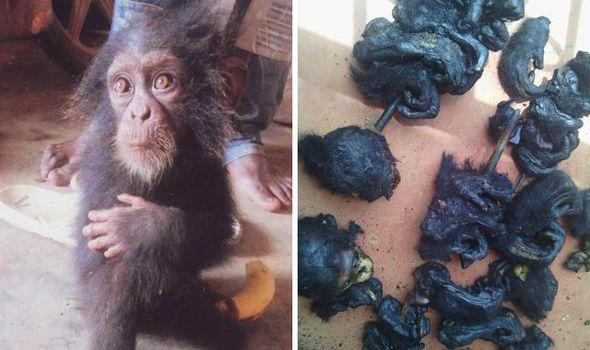 Chimpanzees-ape-trafficking-530956